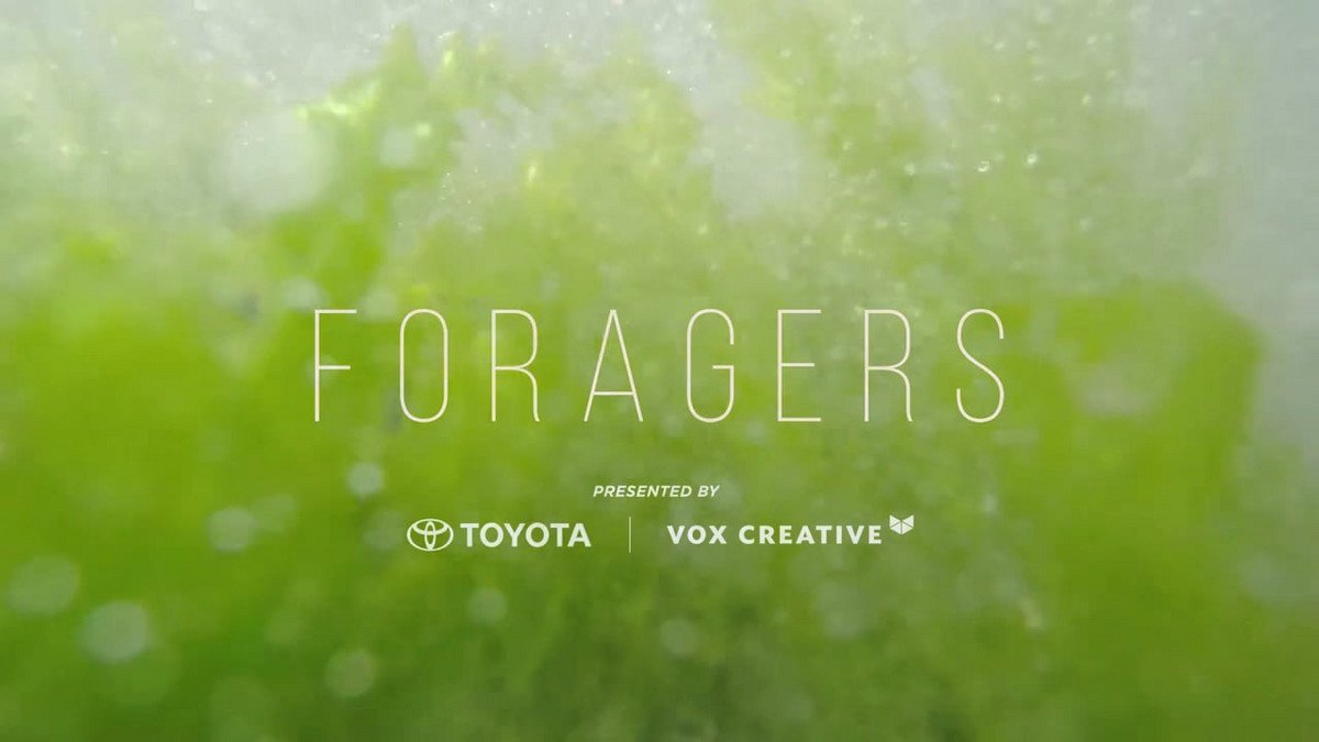 FORAGERS: SEAWEED (Presented by Toyota)
